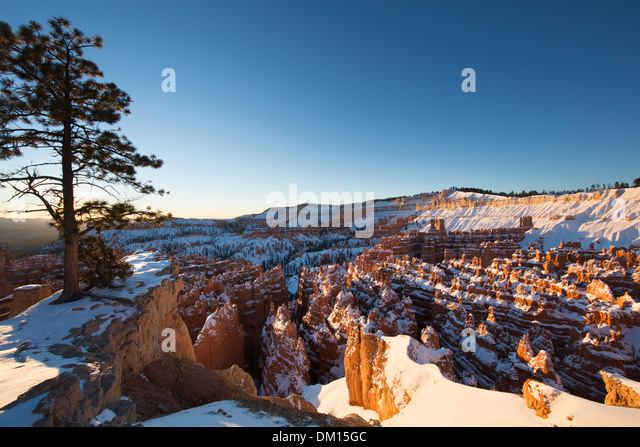 the hoodoos in the Amphitheatre of Bryce Canyon in winter at dawn, Utah, USA - Stock-Bilder