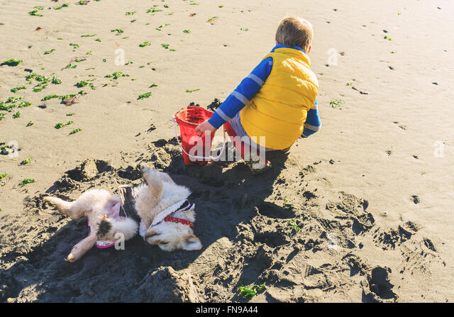 Boy digging on beach with dog rolling in the sand - Stock Image