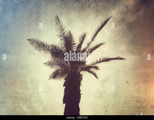 Palm tree - Stock Image