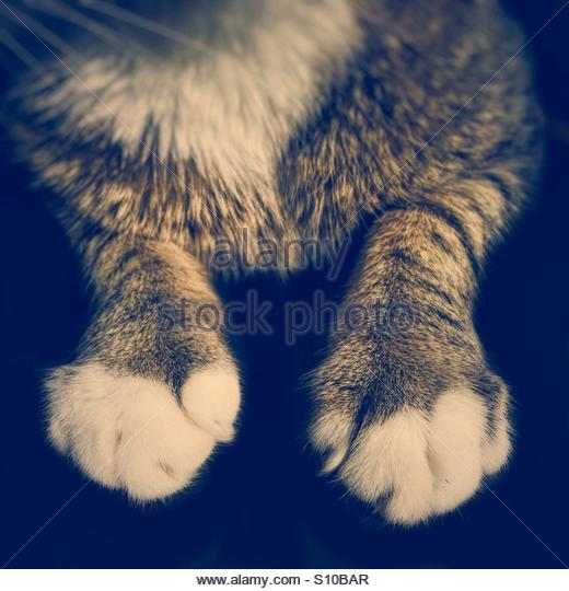 Cat's Paws & Legs - Stock Image