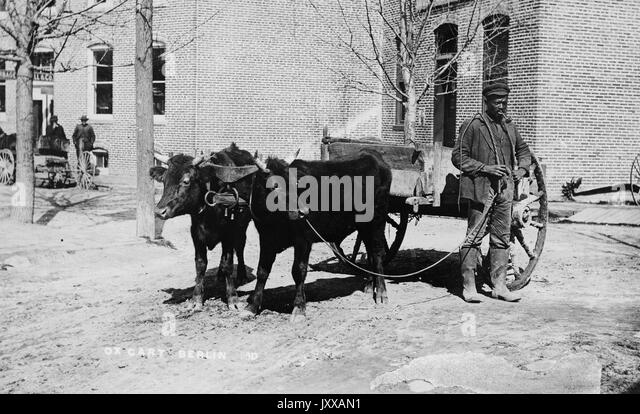 Full length standing portrait of mature African American male working outdoors with wagon driven by two cows, wearing - Stock Image