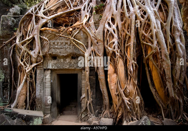 Angkor Wat, Siem Reap, temple overgrown by tree roots - Stock-Bilder