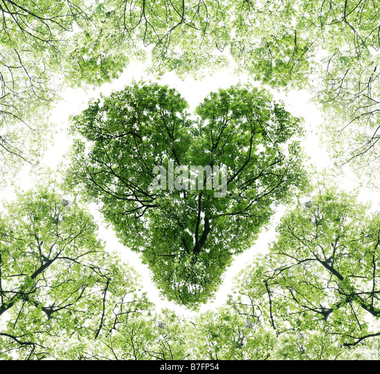 Heart on a background sky as branches of trees - Stock Image