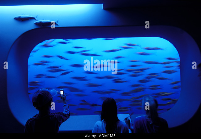 Fish Tank at Monterey Aquarium in Monterey on California's Central Coast - Stock Image