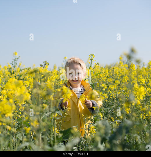 Portrait of a boy standing in yellow flower field - Stock Image