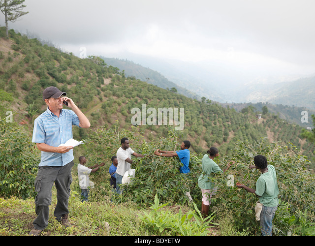 Manager & Workers Picking Coffee Beans - Stock Image