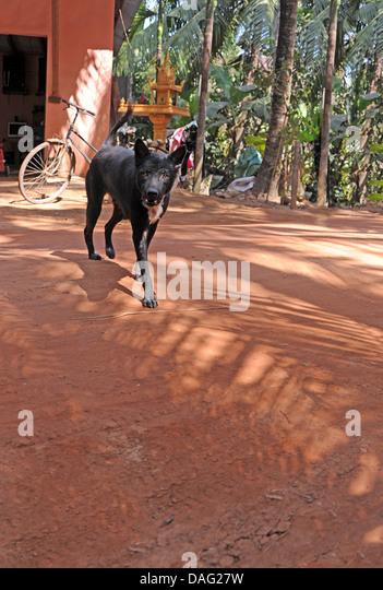 Aggressive dog, Cambodia - Stock Image