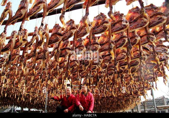 Ji'an, China. 29th November, 2016. Local people work at a processing company of dried salted ducks in Suichuan - Stock Image