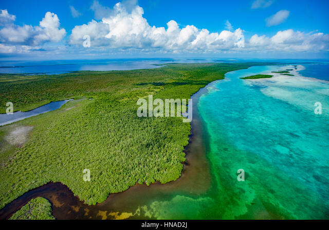 Forested reef, Blue Hole National Monument, Belize,  Caribbean Sea, MesoAmerican Reef, - Stock-Bilder