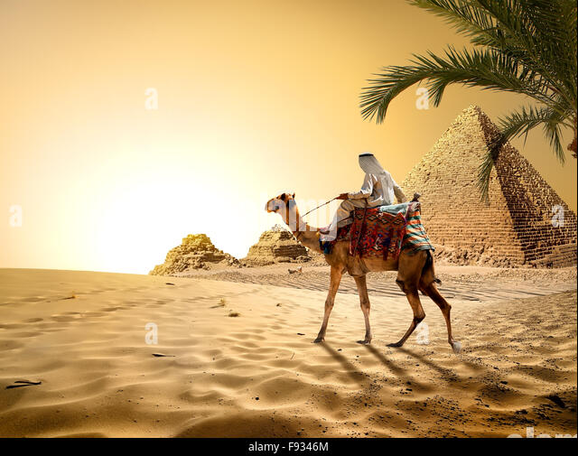 Camel near pyramids in hot desert of Egypt - Stock Image