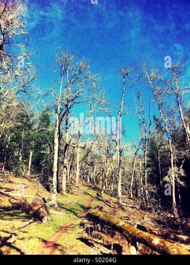 Vertical forest scene - Stock Image