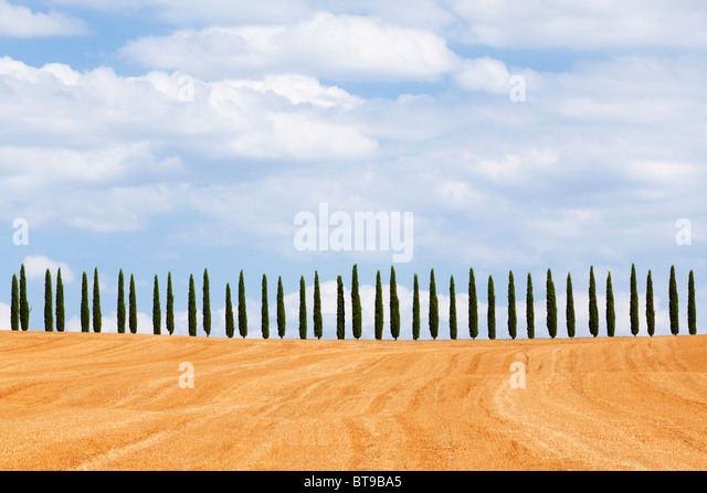 Cypress trees on hill, Tuscany, Italy - Stock Image