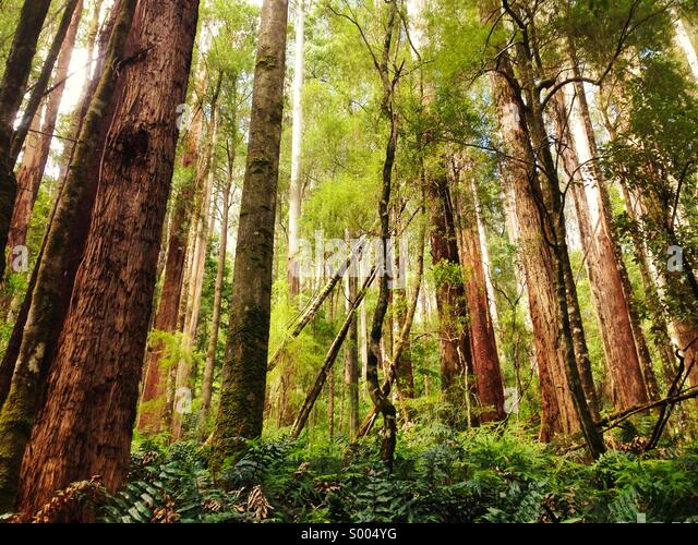 Environment Stock Photos Amp Environment Stock Images Alamy