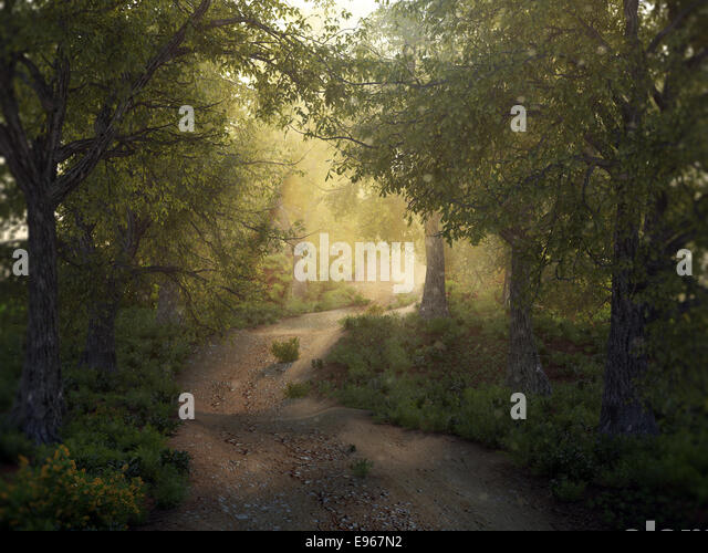 Sunshine in a mysty forest - Stock Image