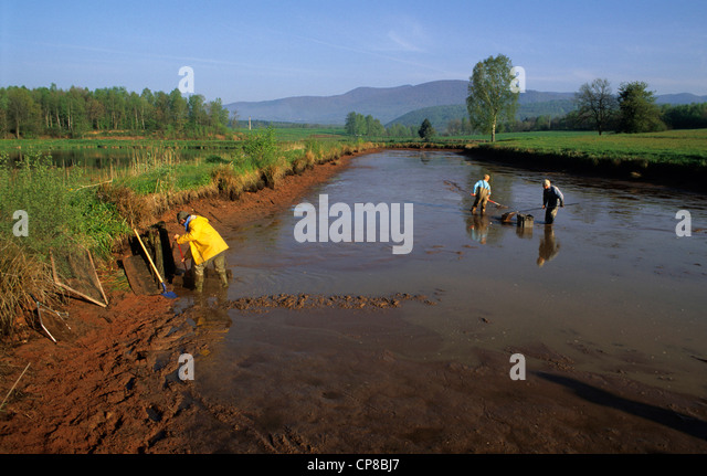 France, Territoire de Belfort, Lachapelle sous Chaux, fish, pond, drainage, fishing, September - Stock Image