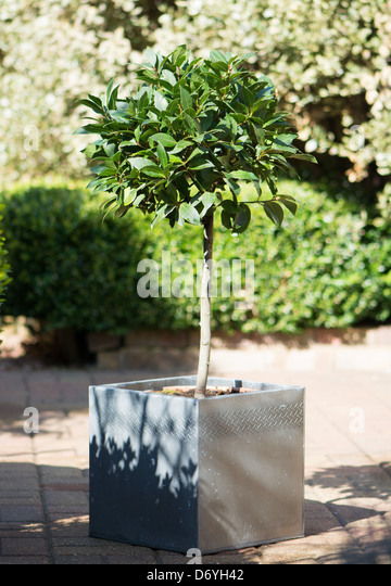 Baytree Stock Photos Baytree Stock Images Alamy