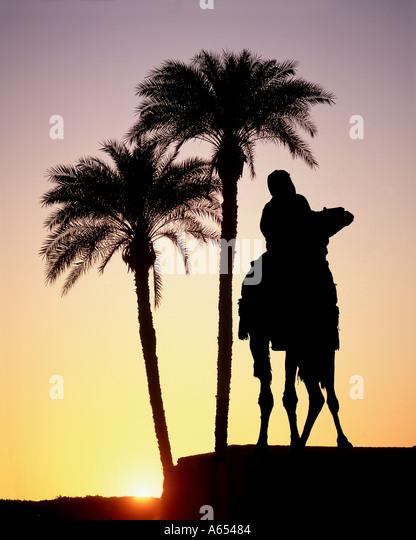Bedouin on camel, Jordan - Stock Image