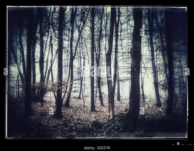 Ancient U.K woodland - Stock Image