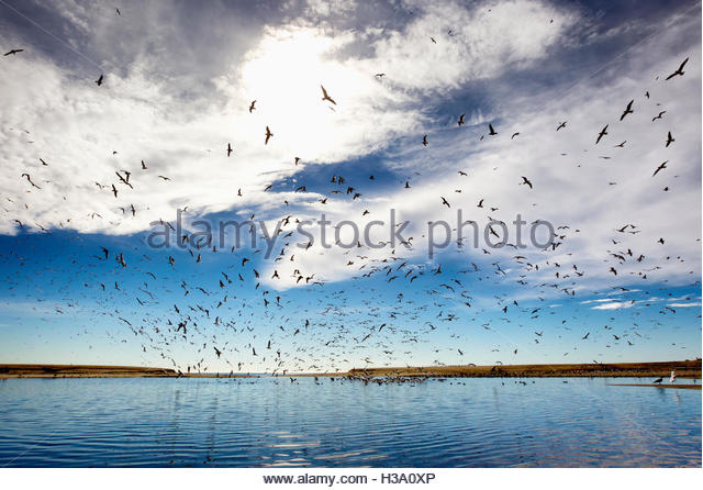 seagulls flying over river mouth, Doheny Park, California - Stock Image