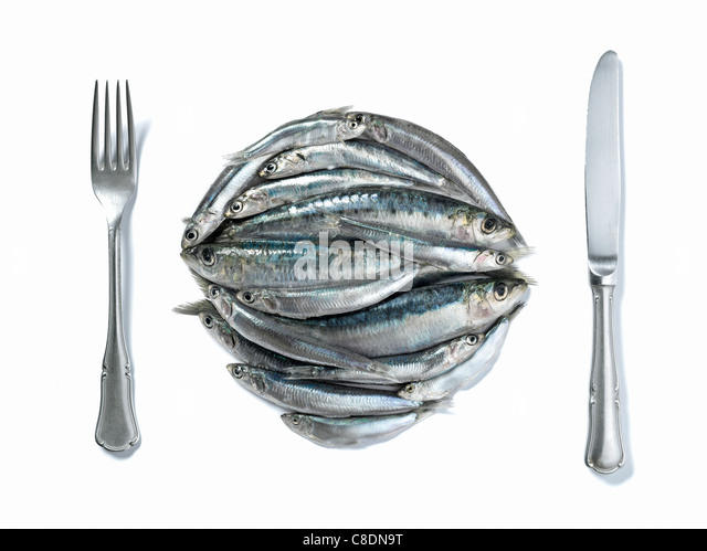 Raw sardines in the shape of a plate with knife and fork - Stock Image