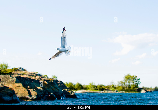 Seagull on the go - Stock-Bilder