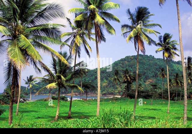 Dominica West Indies Caribbean East Coast Castle Bruce Area - Stock Image