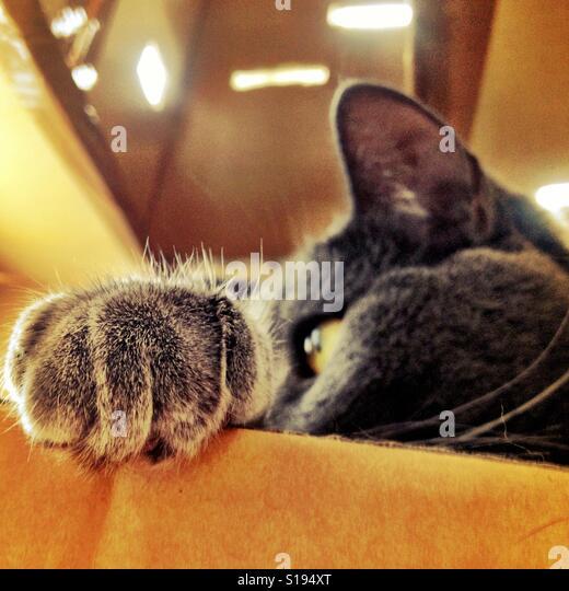 Cat's paw - Stock-Bilder
