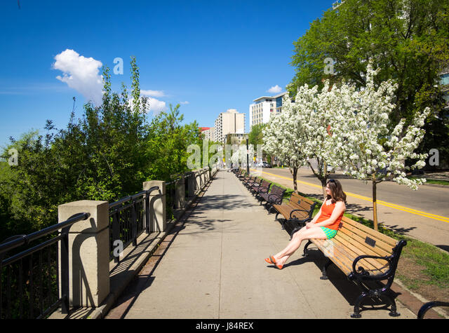 A pretty brunette girl sits on a park bench below blooming Mayday trees (Prunus padus) on Victoria Promenade in - Stock Image