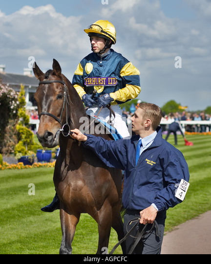 Horse being led round a Parade Ring - Stock Image