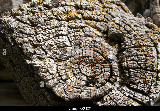 Weathered log - Stock Image