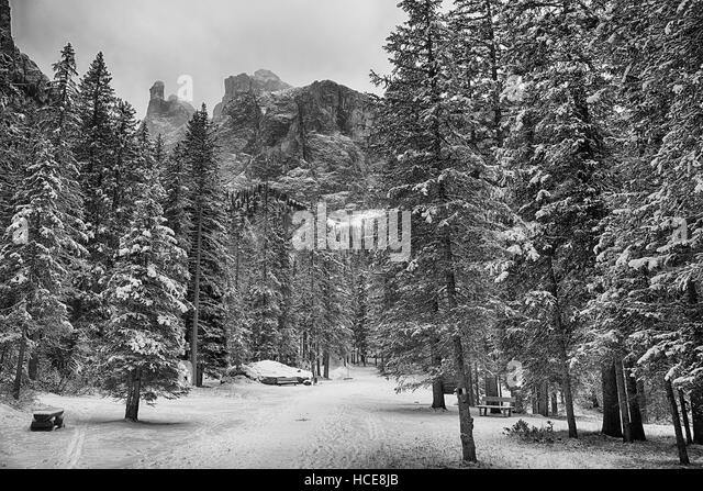 Forest between the villages of Corvara and Colfosco in the winter season with Sella Group in background - Stock Image