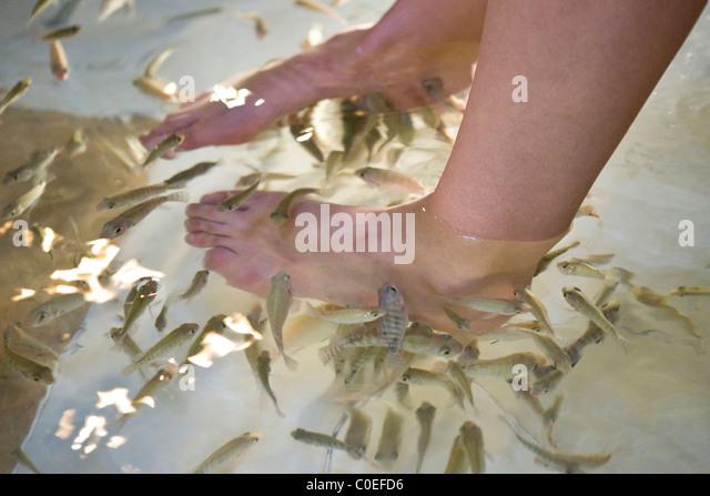 Kangal fish garra stock photos kangal fish garra stock for Fish eating dead skin spa