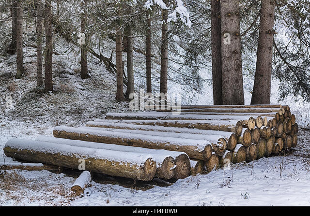 wooden trunks lined up in the snowy forest - Stock Image