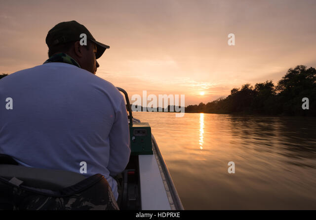 A boat driver in North Pantanal, looking for Jaguars and other animals along the shores of the river. - Stock Image
