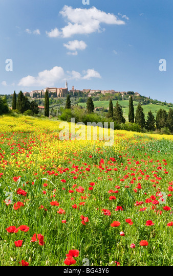 Hill town Pienza and field of poppies, Tuscany, Italy - Stock-Bilder