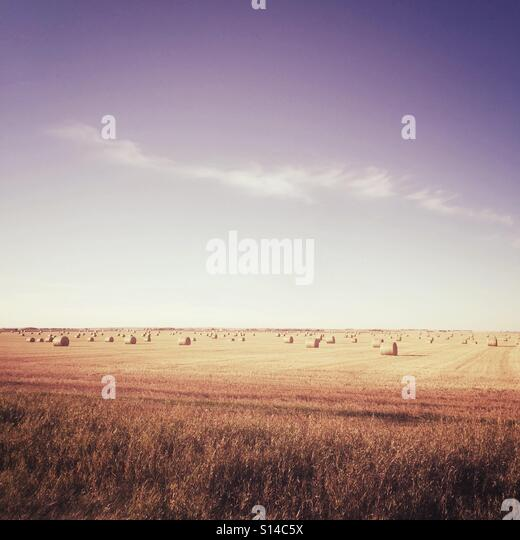 An open field of round hay bales. - Stock Image