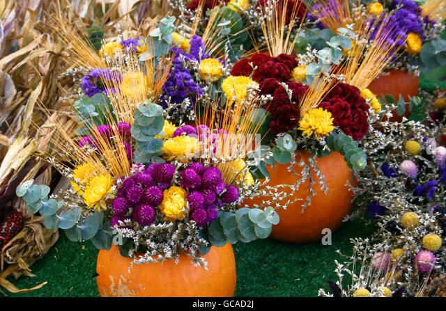 Flower arrangements in pumpkins featuring mums and eucalyptus. - Stock Image