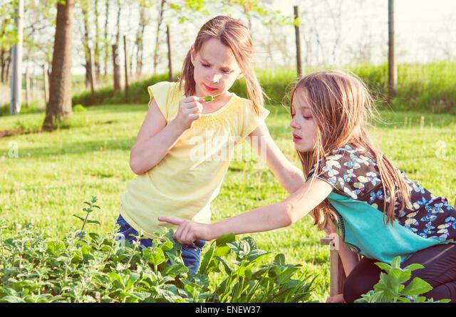 girls in herb garden - Stock Image