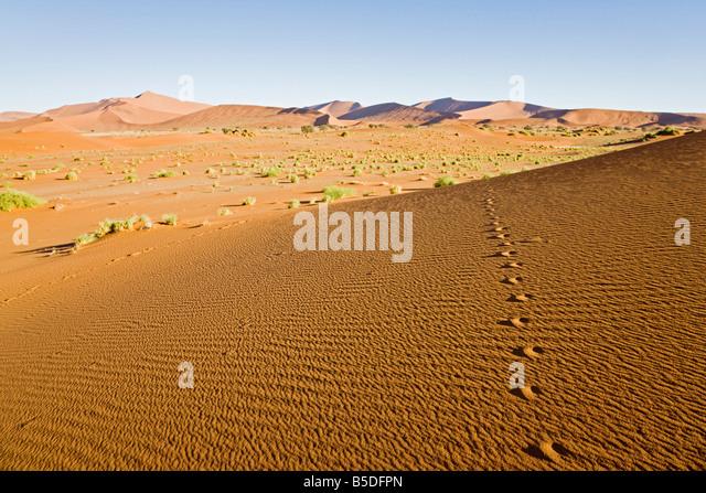 Africa, Namibia, Namib Desert, Animal Tracks - Stock Image