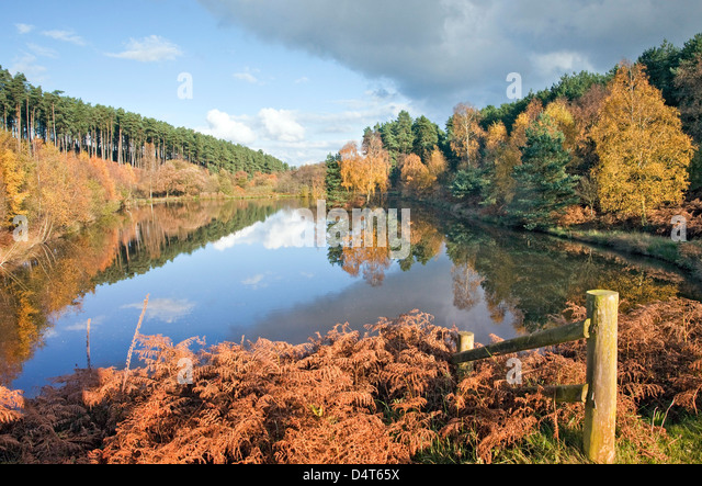 Fair Oak pool in late autumn Cannock Chase AONB (area of outstanding natural beauty) in Staffordshire England UK - Stock Image