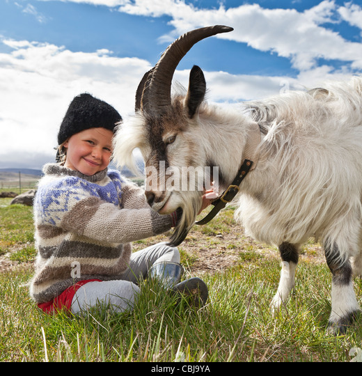 Girl with goat, Goat farm, Iceland - Stock Image