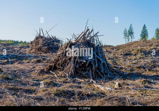 Logging slash piles ready for burning, Vancouver Island, British Columbia, Canada - Stock Image