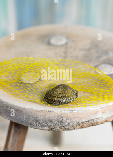 Tunisian littleneck clam - Stock Image
