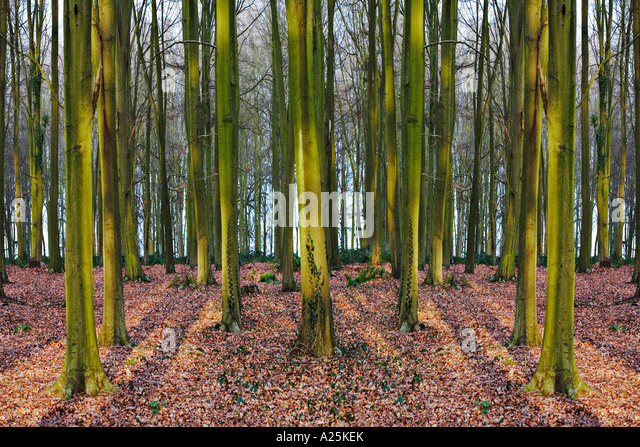 symmetrical trees 2 - Stock Image