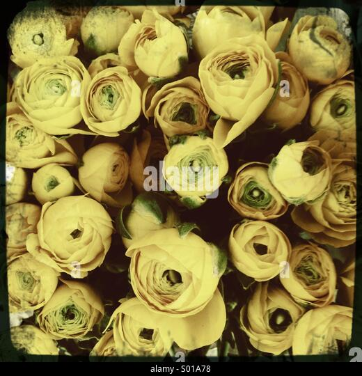 Yellow roses bouquet - Stock-Bilder