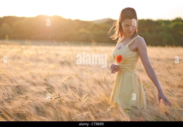 Woman walking through a wheat field, dreamily running her fingers over the wheat ears - Stock Image