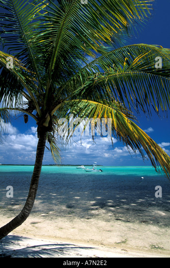 tropical beach with palm trees and bright colorful green blue water and blue sky with puffy clouds - Stock Image