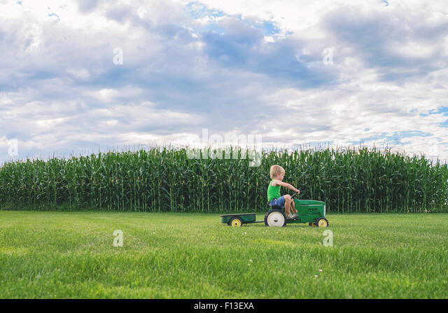 Boy driving past corn field on a toy tractor - Stock Image