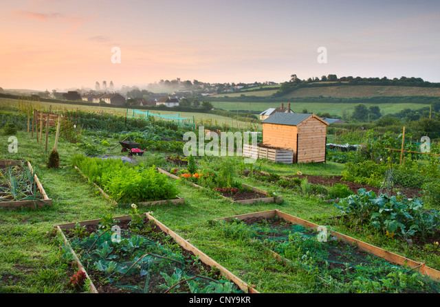 Raised beds on a rural allotment plot on the outskirts of the Mid Devon village of Morchard Bishop, Devon, England. - Stock Image