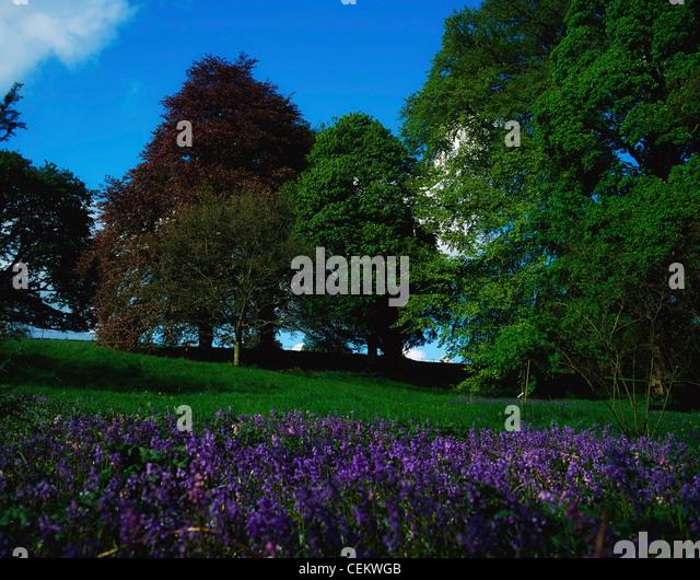 Wild Garden In Ireland - Stock Image